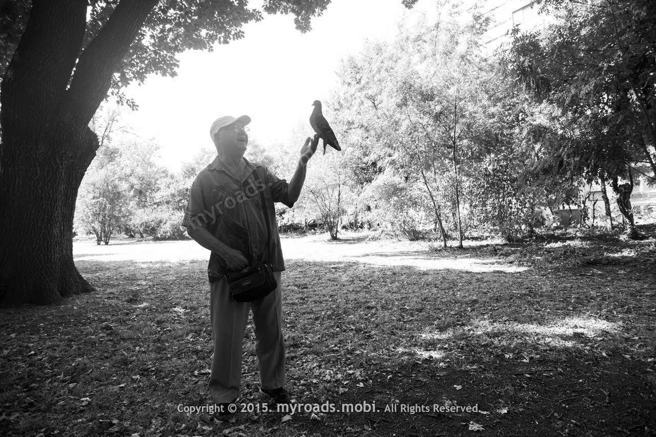man-pigeon-2015-ivelina-berova