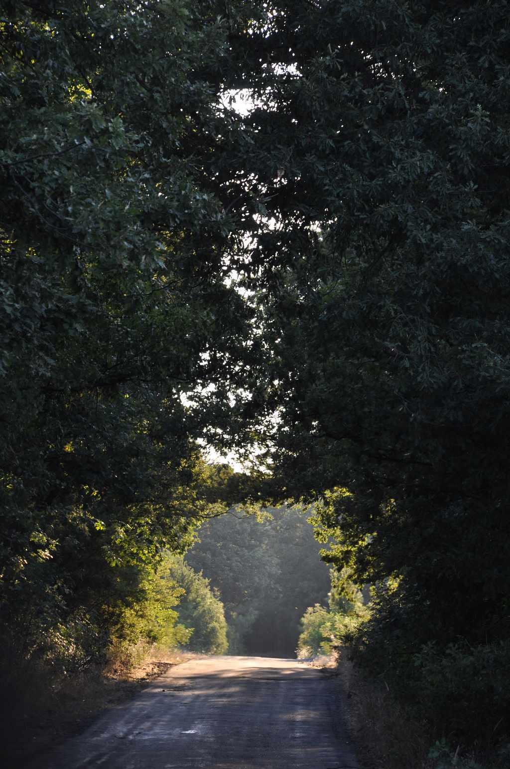 Из горите на Странджа