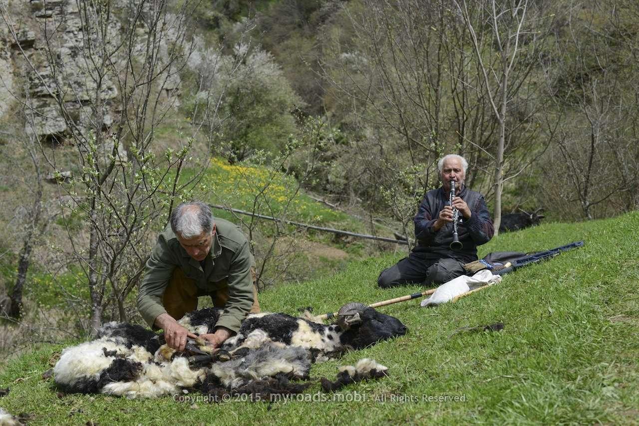 Баща свири на кларинет, син стриже овца! +видео