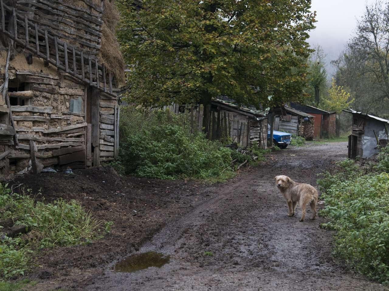 Село Еловица (Трънско)