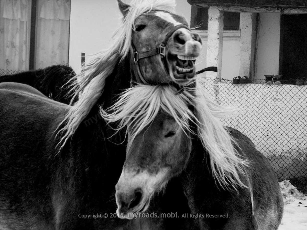 Конят е личност, надарена с  интелект, емоции и воля! – фотогалерия