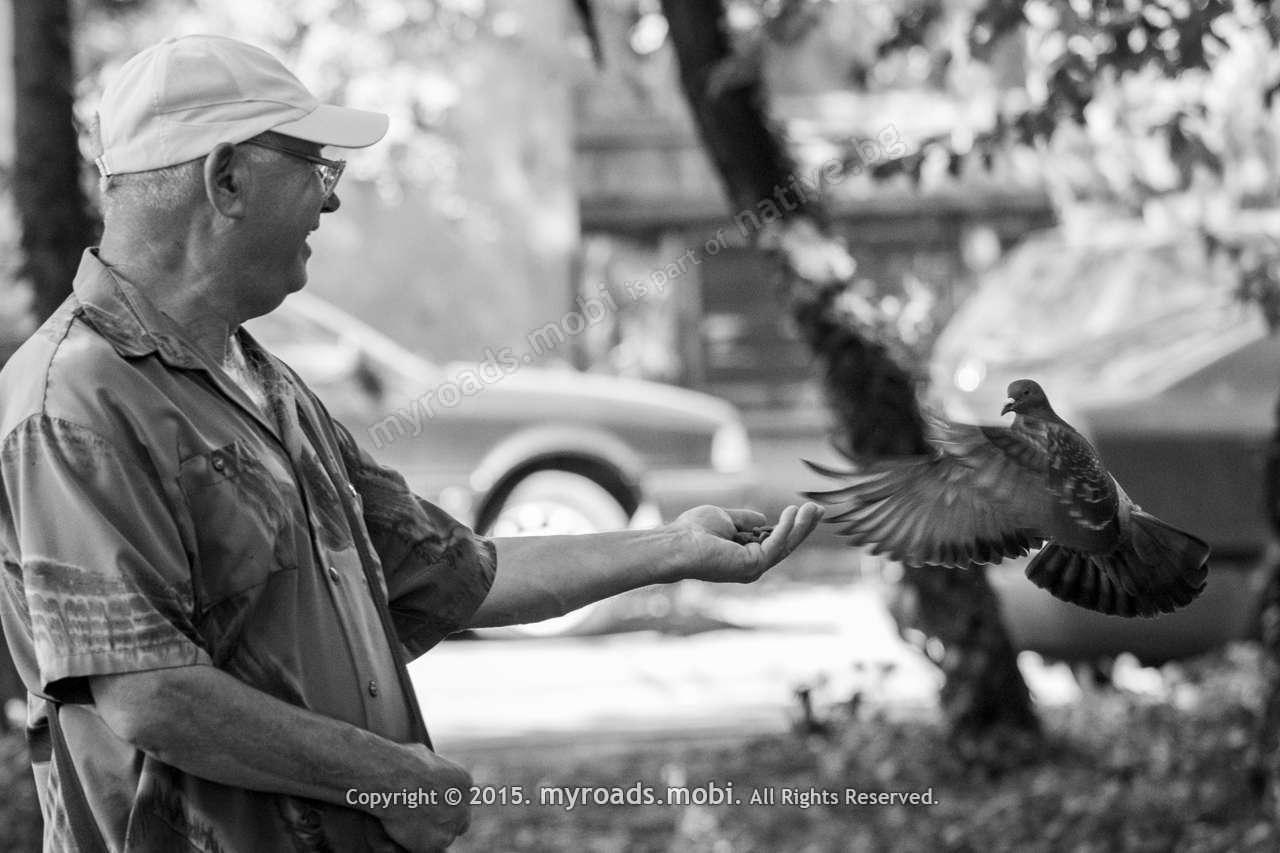 Мъжът, който вече 12 години храни два гълъба в парка.