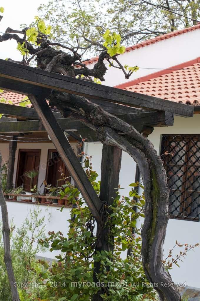 Баткунският манастир се гордее с 600 годишна лоза!